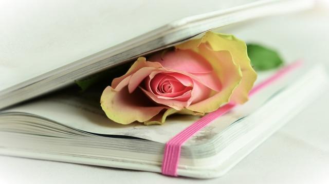 rose-764267_960_720