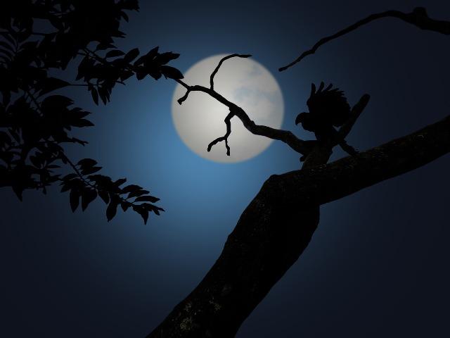 night-1629980_1280