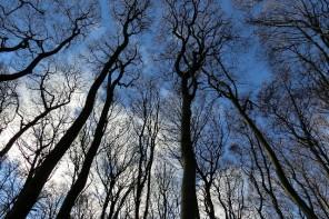 Ќе им зборуваш ли на дрвјата?