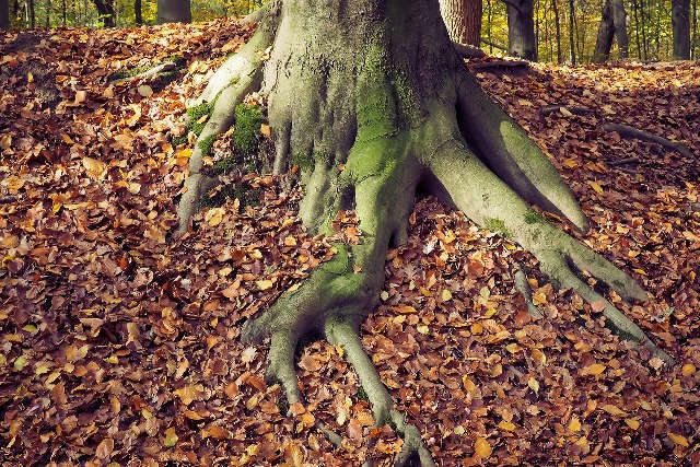 autumn-1827212_1280